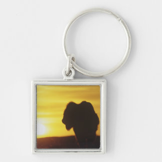 Bison bull sihouette at Theodore Roosevelt Silver-Colored Square Keychain