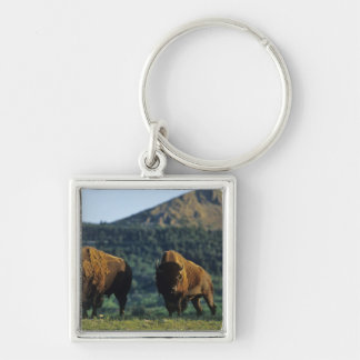 Bison bulls at Waterton Lakes National Park in Keychain