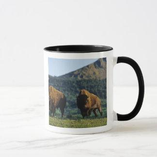 Bison bulls at Waterton Lakes National Park in Mug