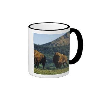 Bison bulls at Waterton Lakes National Park in Coffee Mugs