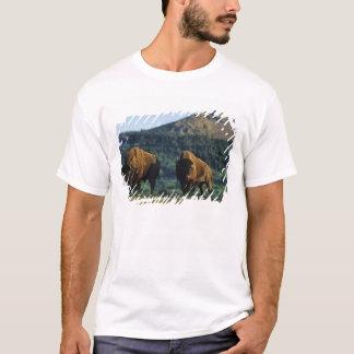 Bison bulls at Waterton Lakes National Park in T-Shirt