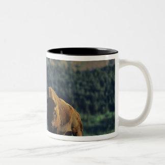 Bison bulls at Waterton Lakes National Park in Two-Tone Coffee Mug