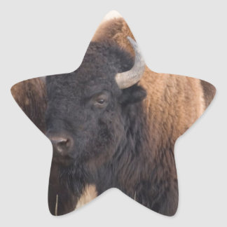 Bison Close-up Star Sticker