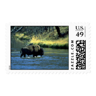 Bison Crossing River Postage Stamps