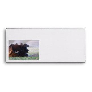 bison envelope