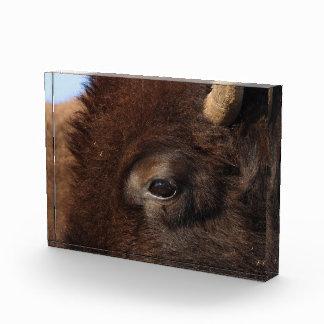 bison eye acrylic award