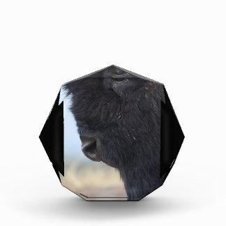 bison face award