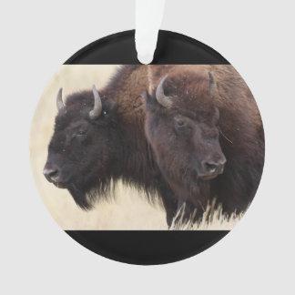 bison friendship
