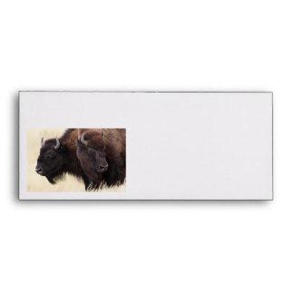 bison friendship envelope
