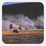 Bison grazing in the Upper Geyser Basin near Square Sticker