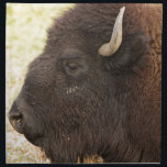 "Bison Headshot Profile Cloth Napkin<br><div class=""desc"">Buffalo close-up head shot profile view. Bison hanging out in north Boulder County Colorado. They weigh close to 2, 000 pounds and some males may top that weight. And they can jump a 6 foot fence from a standing position, or an 8 foot fence on the run. This helps explain...</div>"