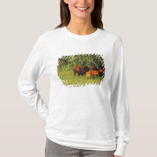 Bison Herd at Neil Smith NWR in Iowa T-Shirt