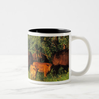 Bison Herd at Neil Smith NWR in Iowa Two-Tone Coffee Mug
