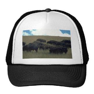 Bison Herd In Dry Grass Trucker Hat