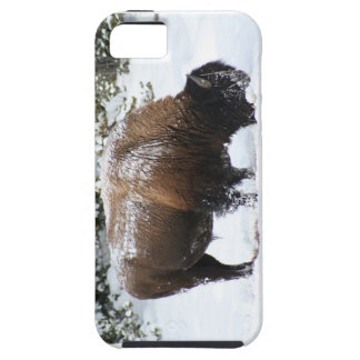 Bison in the grip of Yellowstone Winter iPhone 5 Case