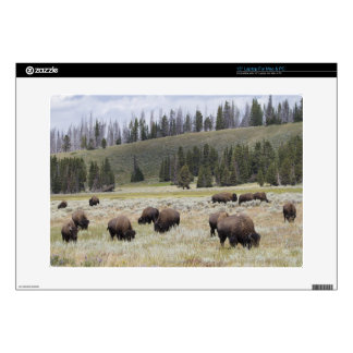 Bison in the Hayden Valley of Yellowstone Decals For Laptops