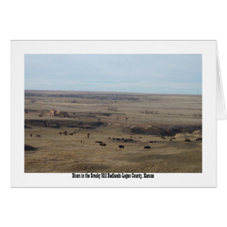 Bison in the Smoky Hill Badlands Card
