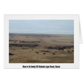 Bison in the Smoky Hill Badlands Greeting Card