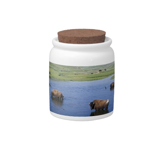 Bison In The Water With Numerous Cliff Swallows Candy Dishes