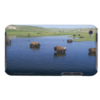 Bison In The Water With Numerous Cliff Swallows Case-Mate iPod Touch Case