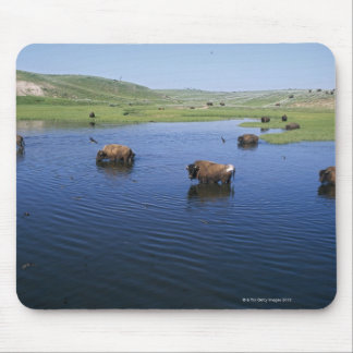 Bison In The Water With Numerous Cliff Swallows Mouse Pad