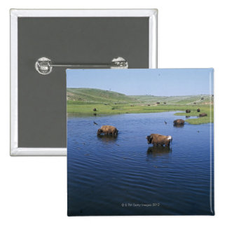 Bison In The Water With Numerous Cliff Swallows Pinback Button