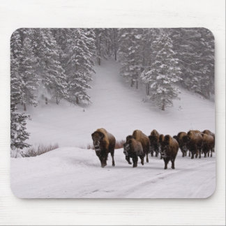 Bison in Winter Mouse Pad