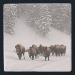 "Bison in Winter Stone Coaster<br><div class=""desc"">Bison in winter,  Yellowstone National Park.</div>"