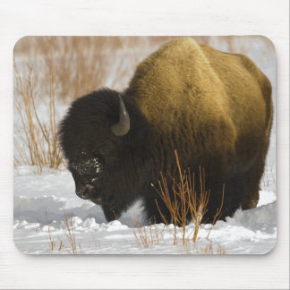 Bison in Winter Yellowstone National Park Mouse Pad