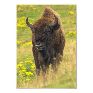 Bison Invitation