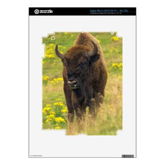 Bison iPad 3 Skin