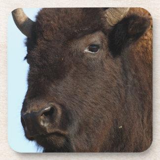 bison lady drink coasters