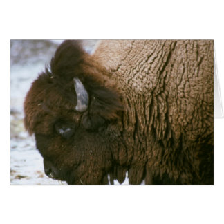 bison Merry Christmas card