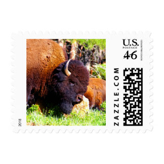 Bison of America Stamp