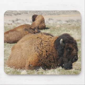 Bison of Antelope Island Mouse Pad