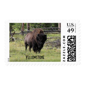 Bison of Yellowstone Photo Stamps