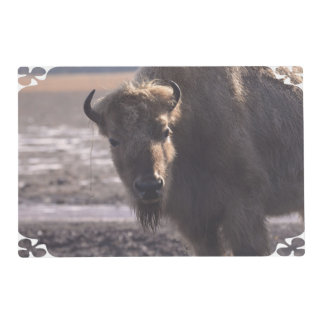 Bison on a Prairie Laminated Place Mat
