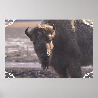 Bison on a Prairie Print