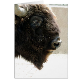 Bison Photo Greeting Card