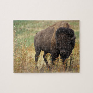 Bison photo jigsaw puzzle