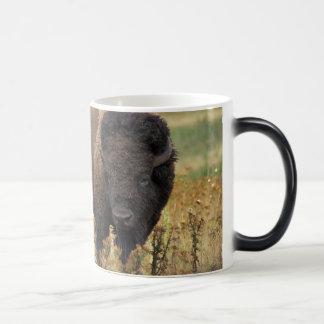 Bison photo magic mug