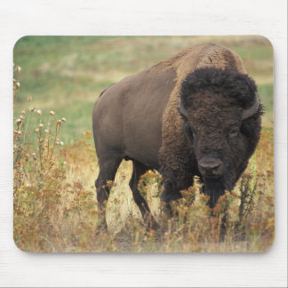 Bison photo mouse pad
