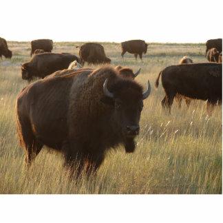 Bison Photo Sculpture 02