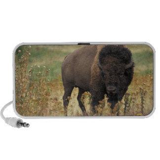 Bison photo laptop speakers