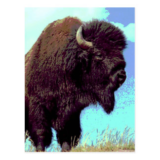Bison Pop Art Postcard