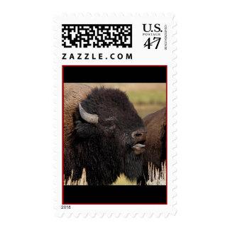 bison postage