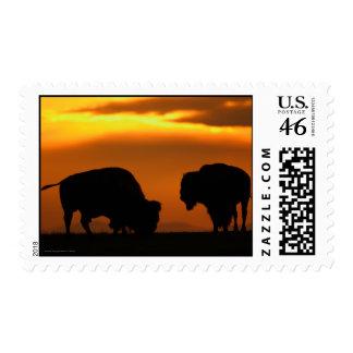 Bison Stamp