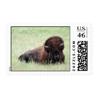 Bison Postage Stamp