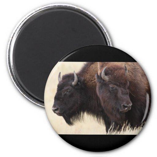 bison refrigerator magnets