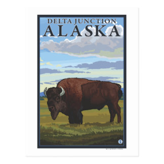 Bison Scene - Delta Junction, Alaska Postcard